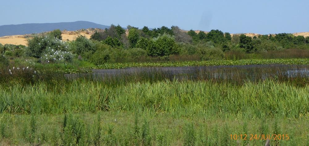 zones humides, Guerbes-Sanhadja, site RAMSAR, Skikda, PNUD, DGF, WWF, gestion durable, préservation, ecotourisme, education environnementale, CESP, Apiculture,  associations