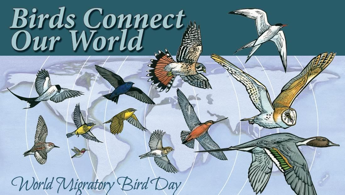 DGF journée mondiale des oiseaux migrateurs