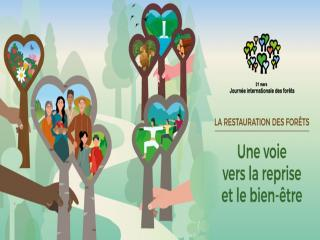 DGF journee internationale forets
