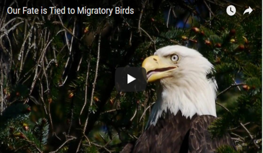 Célébration de la Journée Mondiale des Oiseaux Migrateurs  Le Mercredi 10 Mai 2017